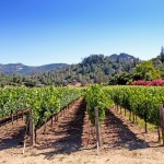 Temecula wine valley